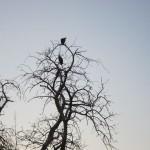 OkavangoDelta-0773