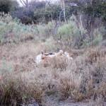 OkavangoDelta-0785