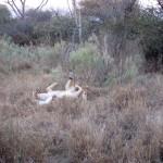 OkavangoDelta-0787