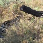 OkavangoDelta-0846