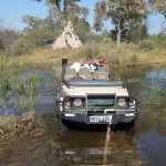 OkavangoDelta-0853
