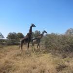 OkavangoDelta-0864