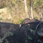 OkavangoDelta-1100999