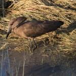 OkavangoDelta-1110031