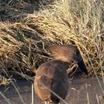 OkavangoDelta-1110033