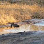 OkavangoDelta-1110042