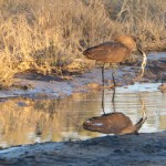 OkavangoDelta-1110043