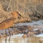 OkavangoDelta-1110044