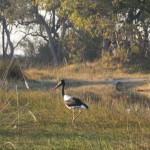 OkavangoDelta-1110160