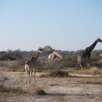 OkavangoDelta-1110178