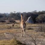 OkavangoDelta-1110179