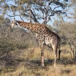 OkavangoDelta-1110180