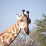 OkavangoDelta-1110182