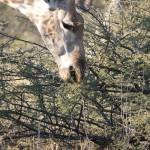OkavangoDelta-1110184