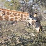 OkavangoDelta-1110186