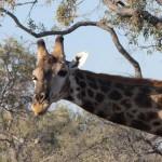 OkavangoDelta-1110188