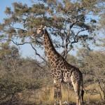 OkavangoDelta-1110198