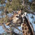 OkavangoDelta-1110201
