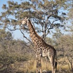 OkavangoDelta-1110203