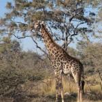 OkavangoDelta-1110207