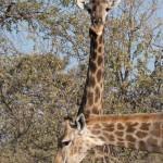 OkavangoDelta-1110213