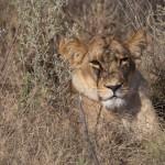OkavangoDelta-1110269