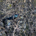 OkavangoDelta-1110316