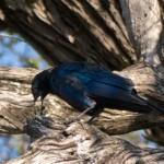 OkavangoDelta-1110337