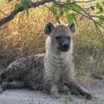 OkavangoDelta-1110359