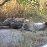 OkavangoDelta-1110360