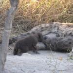 OkavangoDelta-1110365