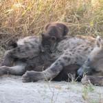 OkavangoDelta-1110368