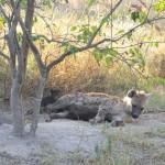 OkavangoDelta-1110369