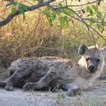 OkavangoDelta-1110371