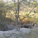 OkavangoDelta-1110375