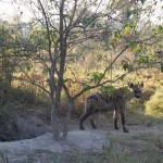 OkavangoDelta-1110389