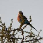 OkavangoDelta-1110426