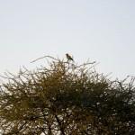 OkavangoDelta-1110429