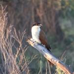 OkavangoDelta-1110430