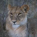 OkavangoDelta-1110434