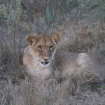 OkavangoDelta-1110437