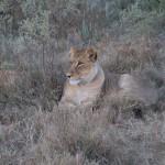 OkavangoDelta-1110439