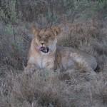 OkavangoDelta-1110448