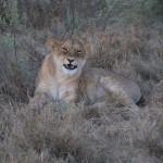 OkavangoDelta-1110449