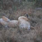 OkavangoDelta-1110452