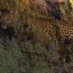 OkavangoDelta-1110463
