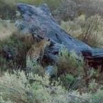 OkavangoDelta-1110466