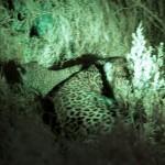 OkavangoDelta-1110474