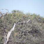 OkavangoDelta-1110525