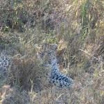 OkavangoDelta-1110532